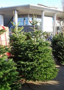 Christmas trees for sale at the Willow Brook Centre in Bradley Stoke, Bristol.